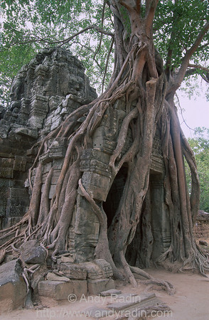 Ta Phrom Doorway