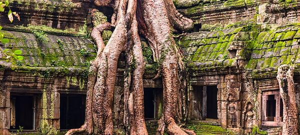 Ta Prohm Spung Tree