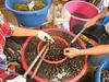Khlong Toey Market_Bankok (18 of 48)