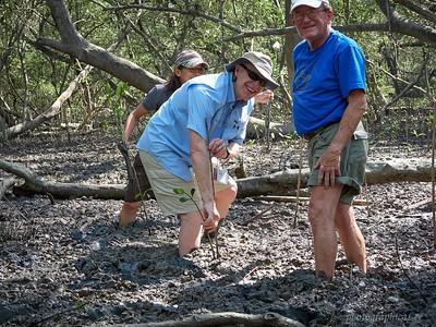 Planting mangrove