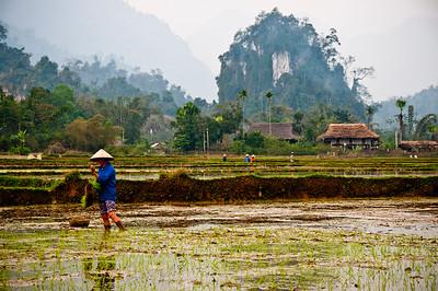 First Planting- Vietnam