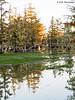 Early morning, 11/15/2016. Magnolia Ridge, B.A. Steinhagen Lake.