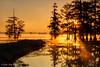 Early morning, 11/16/2016. Magnolia Ridge, B.A. Steinhagen Lake.