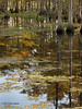 Reflections, Steinhagen Lake, Oct 18, 2012.