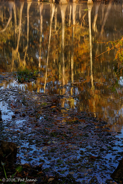 Reflections, 11/14/2016. Magnolia Ridge, B.A. Steinhagen Lake.
