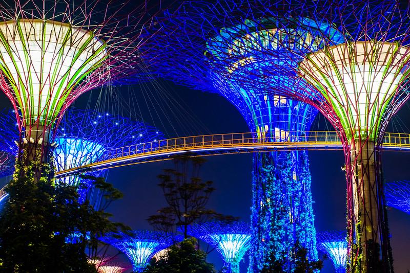 Super Trees at Night