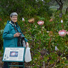Beth enjoying the King Protea  (Protea cynaroides) blooming in<br /> Kirstenbosch Garden, Cape Town, South Africa.