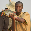 A guide shows us his client's catch from the Okavango River - a tigerfish (Hydrocynus vittatus).