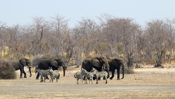 Okavanga Land & Botswana