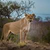 Lion Sands