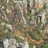 61E Table mountain gondola, view of trail, Cape Town, SA, sep 30, 2016 IMG_1115