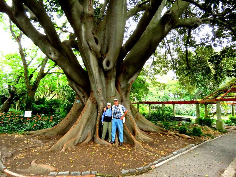 16 Jan & Tom, giant banyon tree, VOC Gardens, Cape Town,IMG_08971