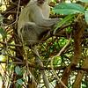 Victoria Falls National Park, Zimbabwe, oct 10, 2016 IMG_34911