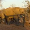 Elephant, Kruger NP, oct 6, 2016IMG_2648