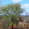 Endomeni to Swaziland, SA, oct 4, 2016 IIMG_21611