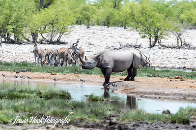White Rinoceros at Etosha Park