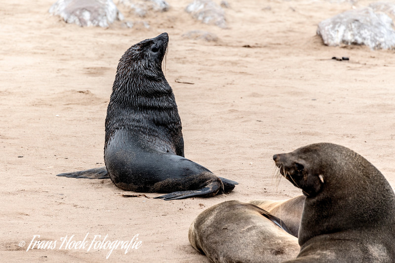 Fur seals at Cape Cross, Namibia