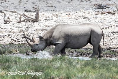 White Rinoceros at Etosha Park