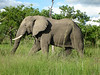 Kruger Nat'l Park - Our first elephant!  (..of many)