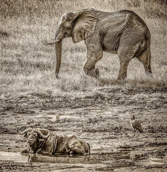 Visitors at the Water Hole, Okavango Delta, Botswana