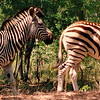 McIlwaine Game Park is 22 miles from Harare.