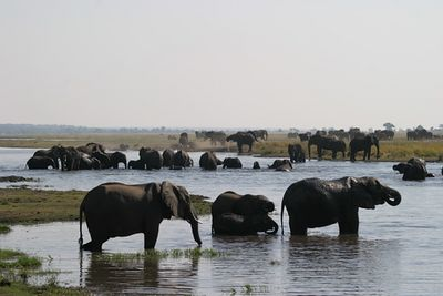 Chobe River, Botswana, elephant watering hole.  We literally saw thousands of elephants bathing in this river.  We decided not to go swimming.