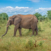 Elephants of Chobe NP, Botswana