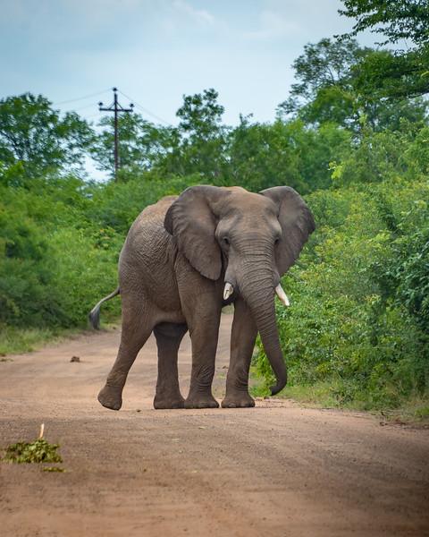 Traffic Encounter in Hwange NP, Zimbabwe