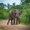 Traffic Encounter in Hwange NP, Zimbabwe