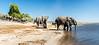 Elephants gathering in Chobe National Park