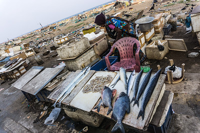 Selling fresh fish along the beach in Chennai