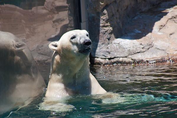 San Diego Zoo, July 2010
