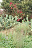 There were a lot of cactus plants at Mudtown Farms.