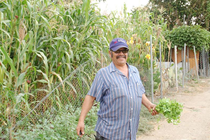 A proud gardener harvests cilantro from his plot.