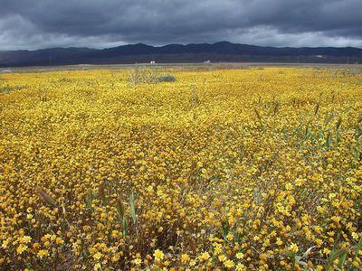 Carrizo Plains 4/9/05