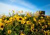 La-Jolla-Spring-Flowers-1