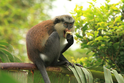 Grenada rain forest