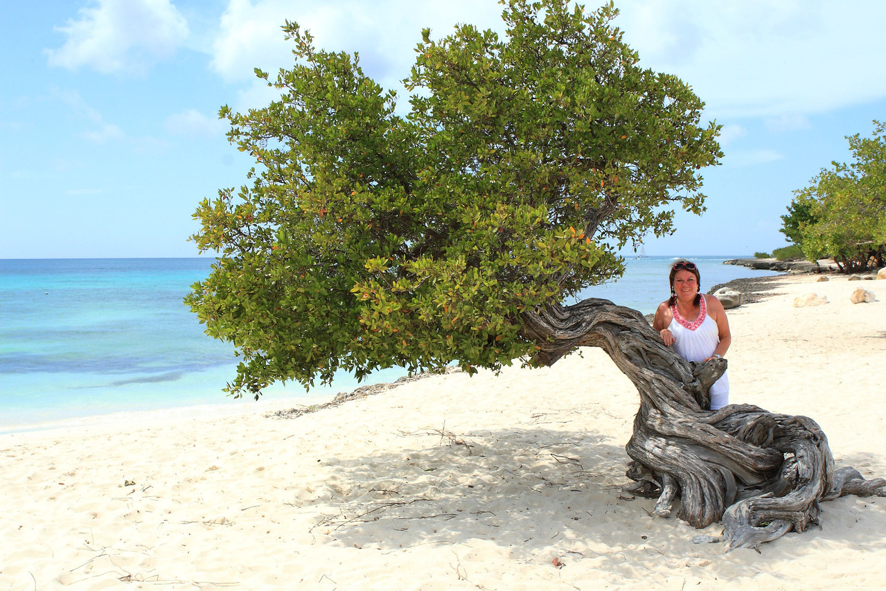 Pam and Divi tree