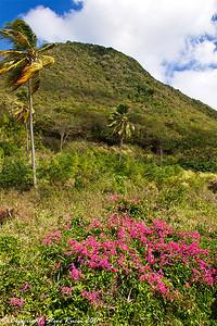 Horseback riding up to the rainforest in St. Kitts