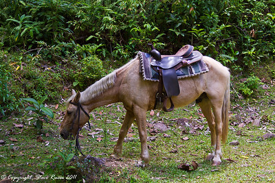 My poor horse.  He needed a long break after hauling me up into the rainforest.