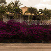 Curacao: Flowers Everywhere