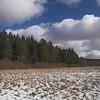 Grassland near Elva river.