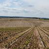 Lots of vineyards
