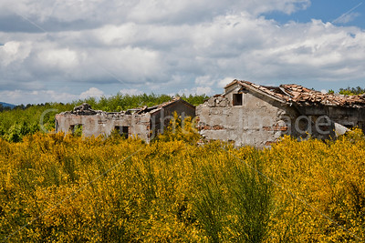 Abandoned buildings surrounded by flowers
