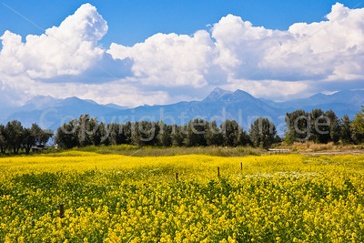 Wildflowers and mountains and clouds