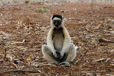 Southern Madagascar 2010