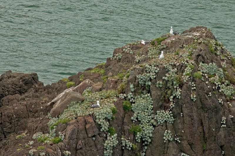 5466---seagulls-on-rock