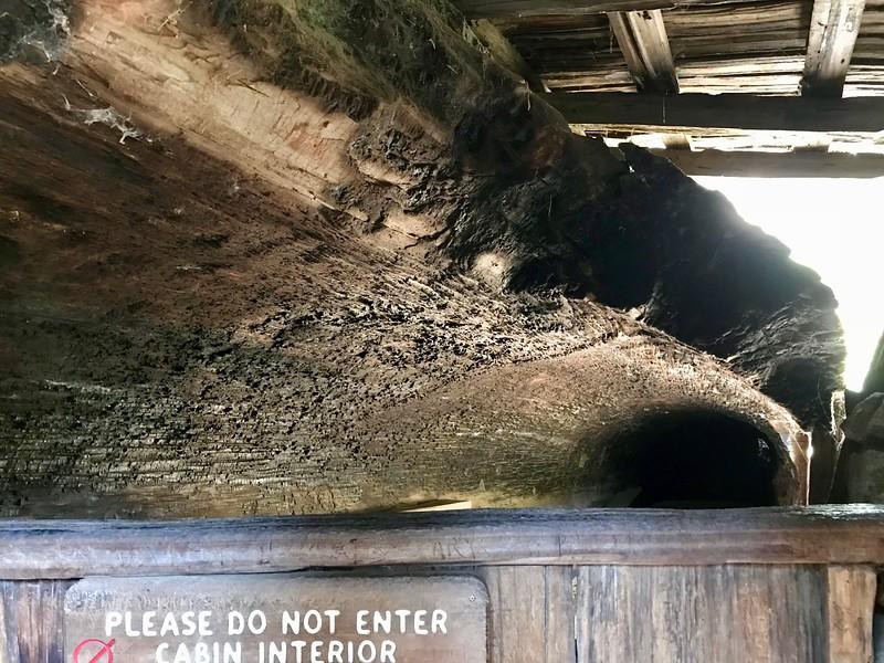 Inside Tharp's Log