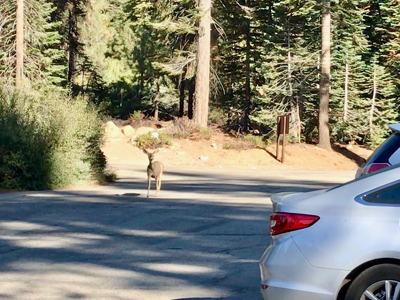 A deer coming by to see me off