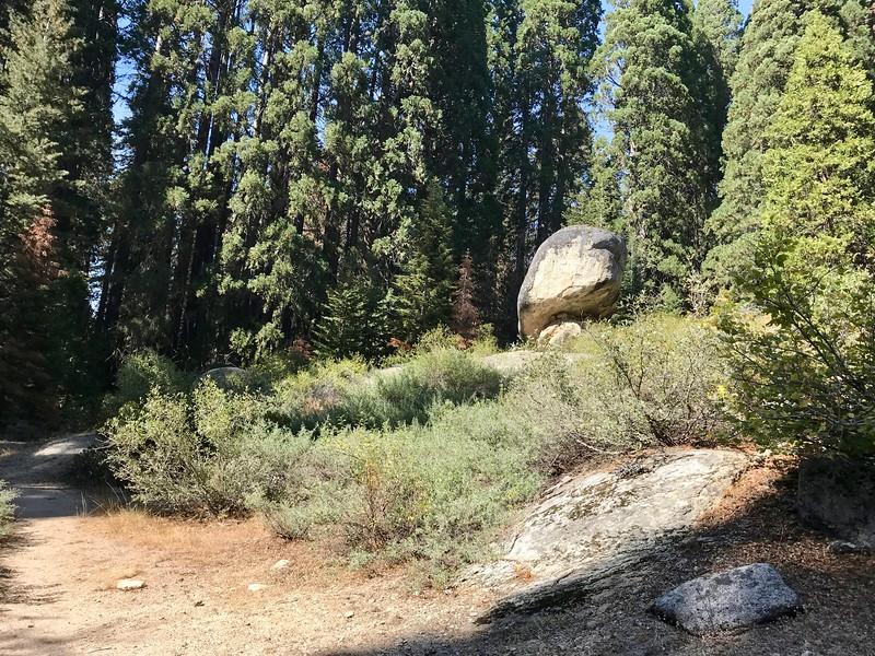 The Big Stump Trail
